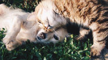 hond en kat in het gras