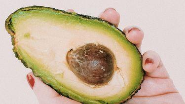avocadopitten