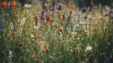 veld bloemen