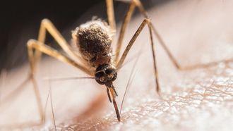 mug op huid