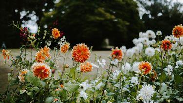 veld met bloemen