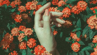 hand in een veld met bloemen