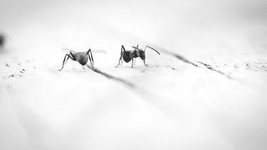 muggen wegjagen