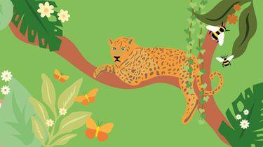 illustratie van biodiversiteit