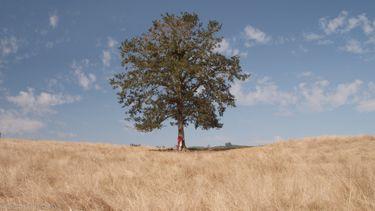 hoe slim zijn bomen