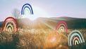 ochtendzon in een veld