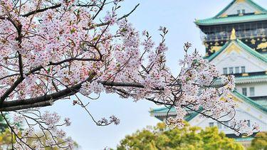Hanani japanse bloem