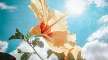 Bloem die verlicht wordt door de zon