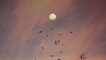 De volle maan die dieren en planten beïnvloedt