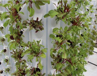 vertical farming muur