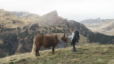 man met paard in natuur
