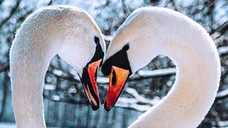 twee verliefde zwamen