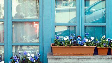 blauw huis