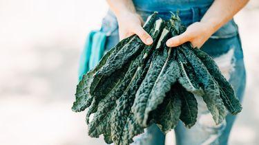 boerenkool die veel vitamine K bevat