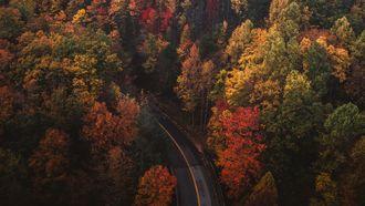 gekleurde bomen van bovenaf