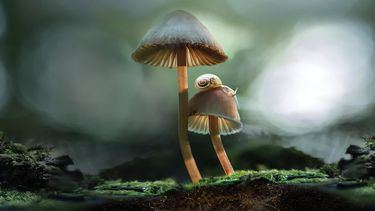 Afbeelding van Fantastic Fungi Netflix