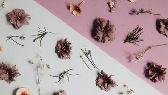 rozen blaadjes
