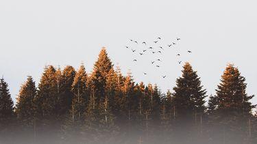 Liefde volgens vogels