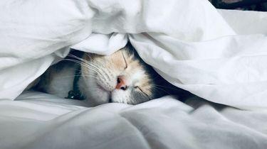 kat is lekker aan het slapen