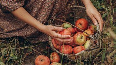 Vrouw die in voedselbos appels heeft gevonden