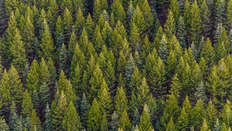 nieuwe bossen in Nederland