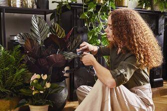 planttherapie