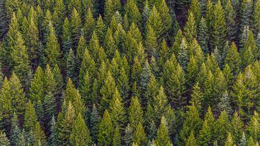 een bos met veel bomen