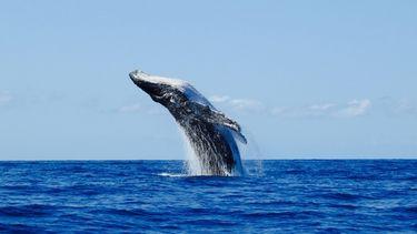 Foto van een walvis