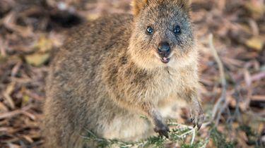 72 cutest animals netflix