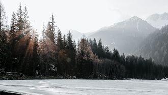 bossen in de sneeuw