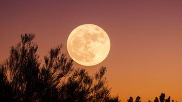maan astrologie