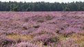 Bedrock ontdekt Nederland: Nivon trektochten