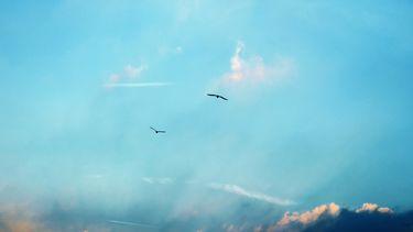 vogel vliegt in de lucht