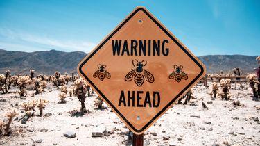 natuurlijke bescherming wespenplaag