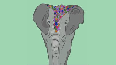 olifant rijden niet oke