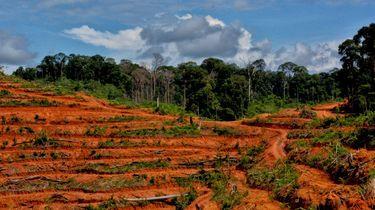 palmolievrij