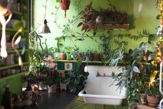 planten in keuken