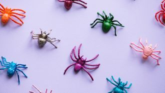 speelgoed spinnen