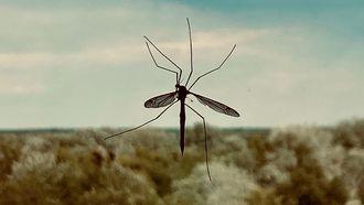 gebeten mug tips