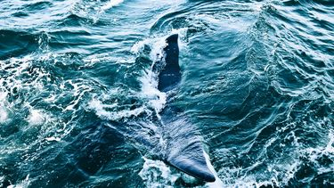 ocean with whale tail