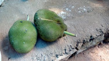 twee jackfruits in de schil