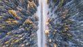 bos met sneeuw