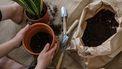 potjes en plantjes