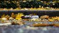 plastic fles ligt op straat in rome