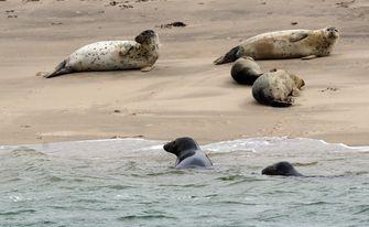 Waddeneilanden zeehonden
