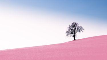 een boom in een woestijn