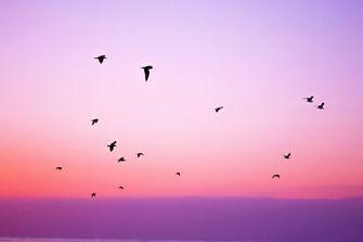 Vrije vogels in een roze lucht