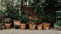 bloempotten in de stad