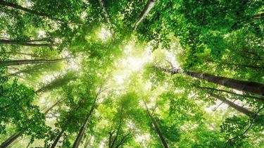 bomen, northern forest, engeland, groot-brittannie, bos, bomen