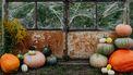 op elkaar gestapelde pompoenen